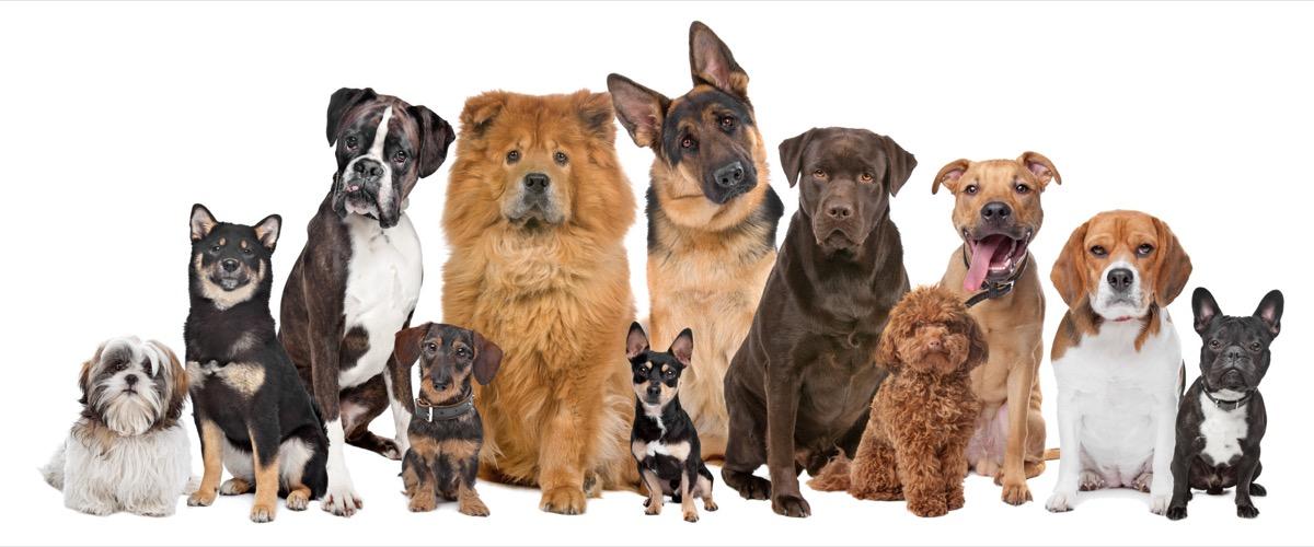 dog breed trivia quiz